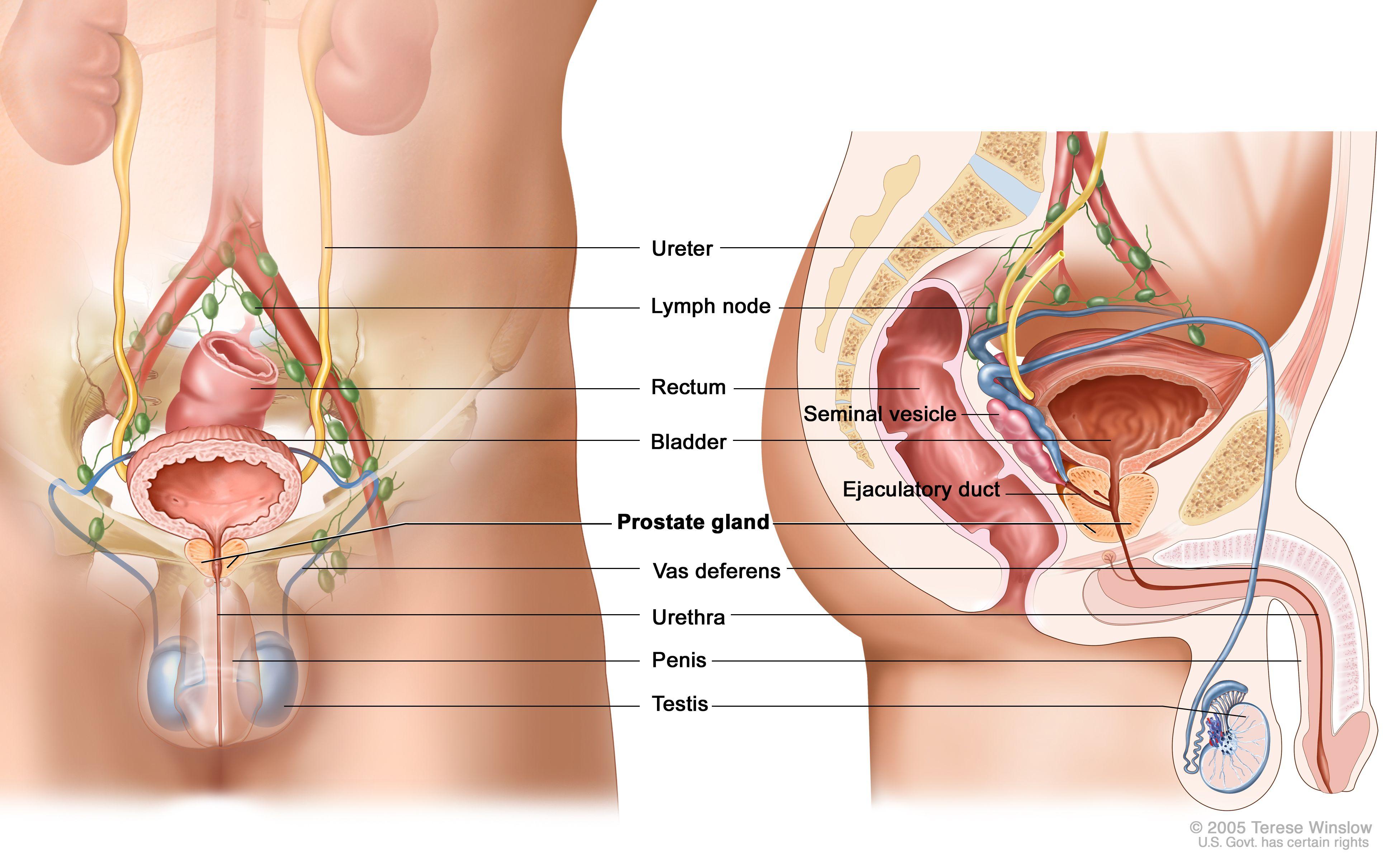prostate problems treatment Fájdalom a péniszben és a prosztata