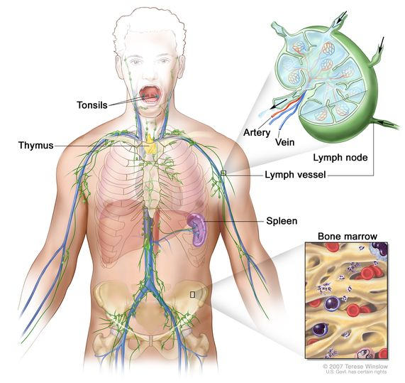 Definition Of Lymph Node Nci Dictionary Of Cancer Terms