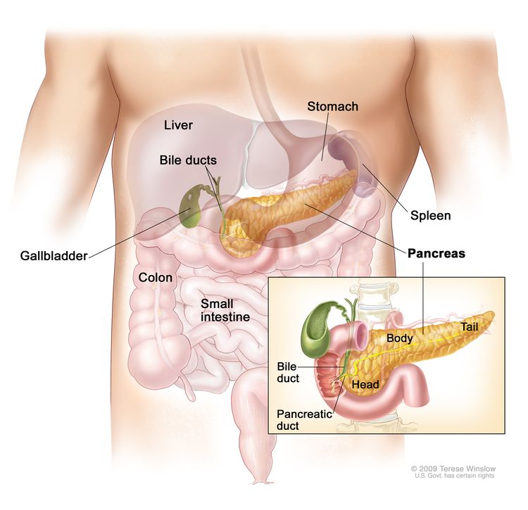 Anatomy of the pancreas; drawing shows the pancreas, stomach, spleen, liver, gallbladder, bile ducts, colon, and small intestine. An inset shows the head, body, and tail of the pancreas. The bile duct and pancreatic duct are also shown.