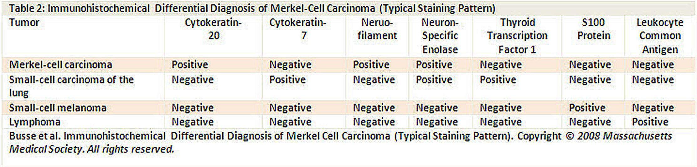 メルケル細胞