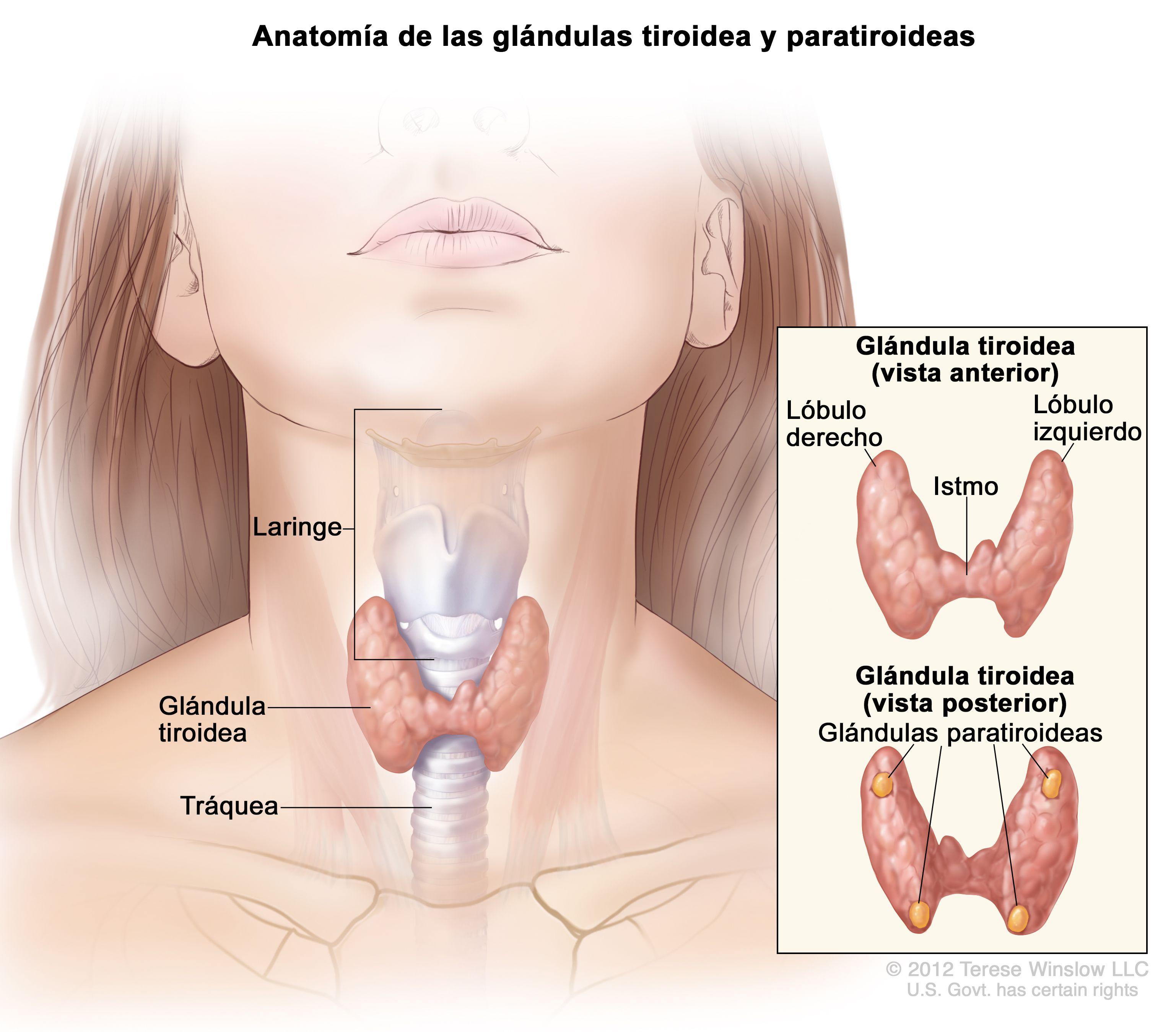 cancer de tireoide tratamento