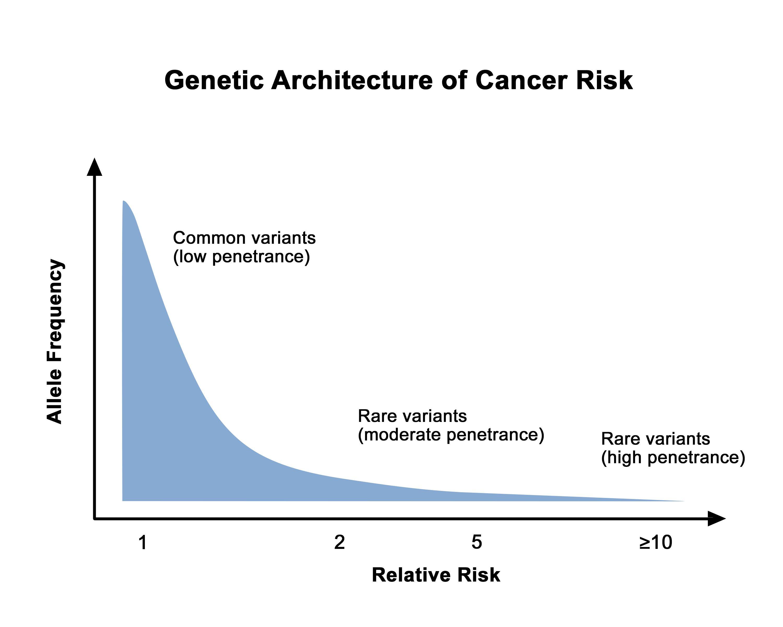 グラフのX軸は相対リスクを示し、Y軸はアレル頻度を示す。曲線は、低い相対リスクは高頻度で低浸透度の遺伝子多様体に関連し、高い相対リスクはまれな高浸透度の遺伝子多様体に関連するという全体的な知見を示している。