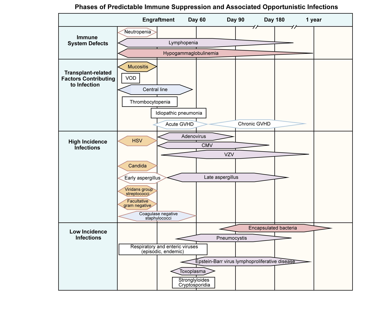 本図は同種造血幹細胞移植を受けた患児における、予測しうる免疫抑制および関連する日和見感染を示す。