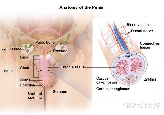 a pénisz laphámsejtes karcinóma