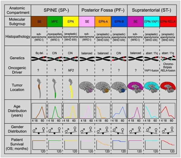 上衣腫瘍の亜型の主要な分子的および臨床的特徴を示すグラフ。