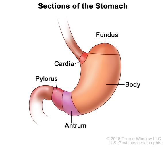 cancer of gastric antrum preparate pentru combaterea viermilor