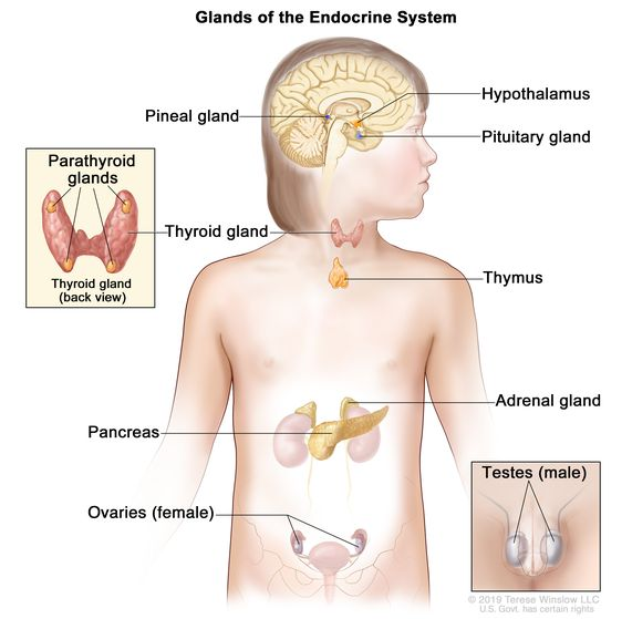 endocrine cancer of the ovary